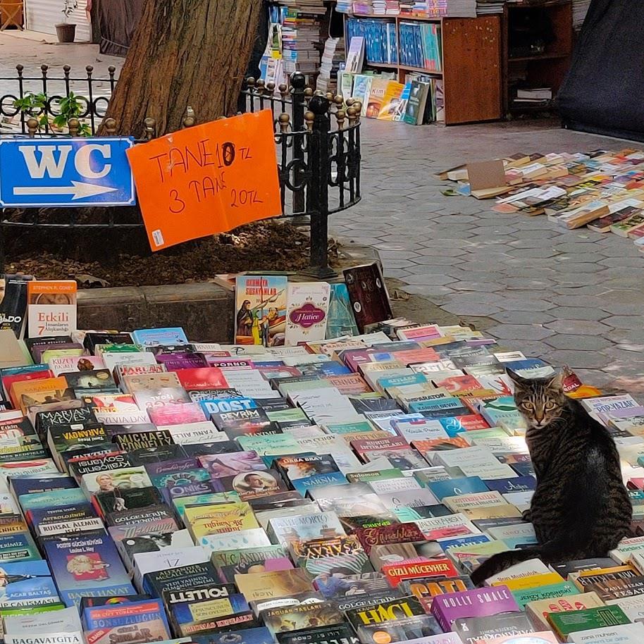 Los gatos son los auténticos reyes de Estambul…